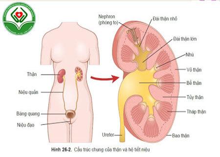 Tìm hiểu chung bệnh nhiễm trùng tiết niệu